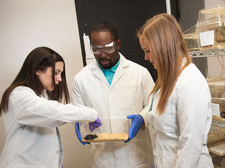 Three students in lab coats examine a mouse in a lab